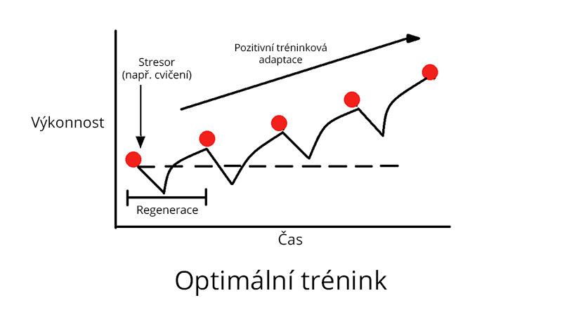 optimální trénink